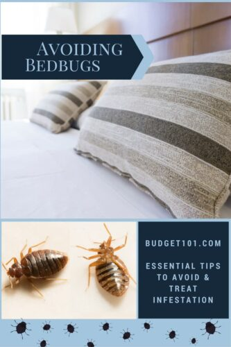 essential tips to avoid bedbug home infestations