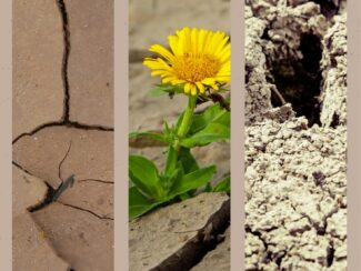 how to protect your lawn during drought season