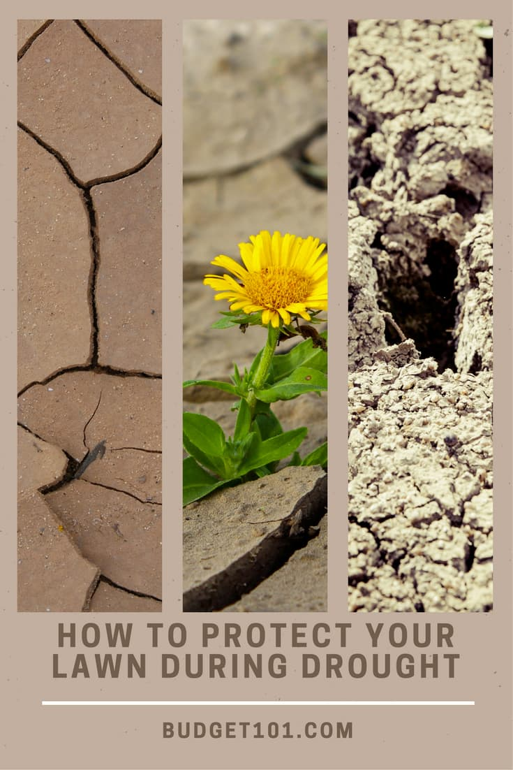 how-to-protect-your-lawn-during-drought-season