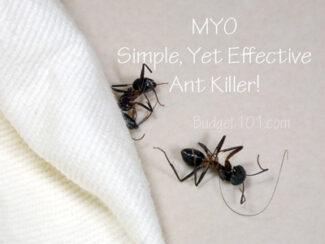 water bottle ant killer recipe