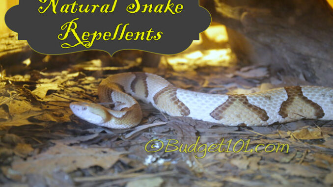 repelling snakes naturally