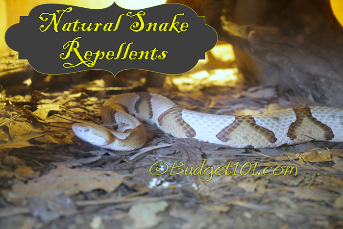 repelling-snakes-naturally