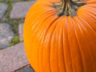 MYO Pumpkin Preserver- Prevent Mold and Wilt