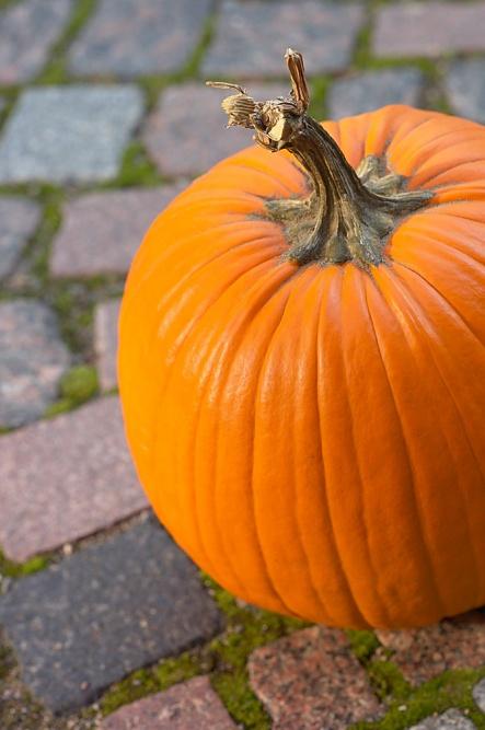 myo-pumpkin-preserver-prevent-mold-and-wilt