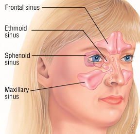 how-to-use-pressure-points-to-relieve-sinus-pressure-instantly