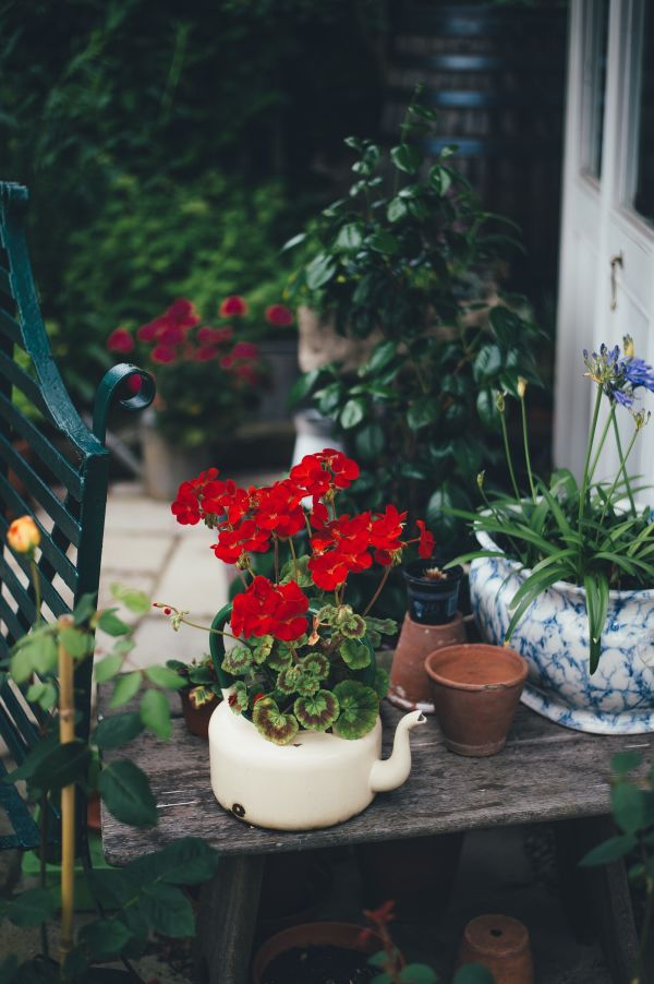 how-to-create-a-budget-garden