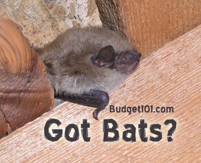 bats-bats-and-more-bats