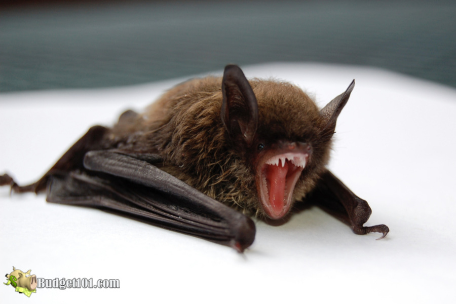 how to safely remove bats from your home