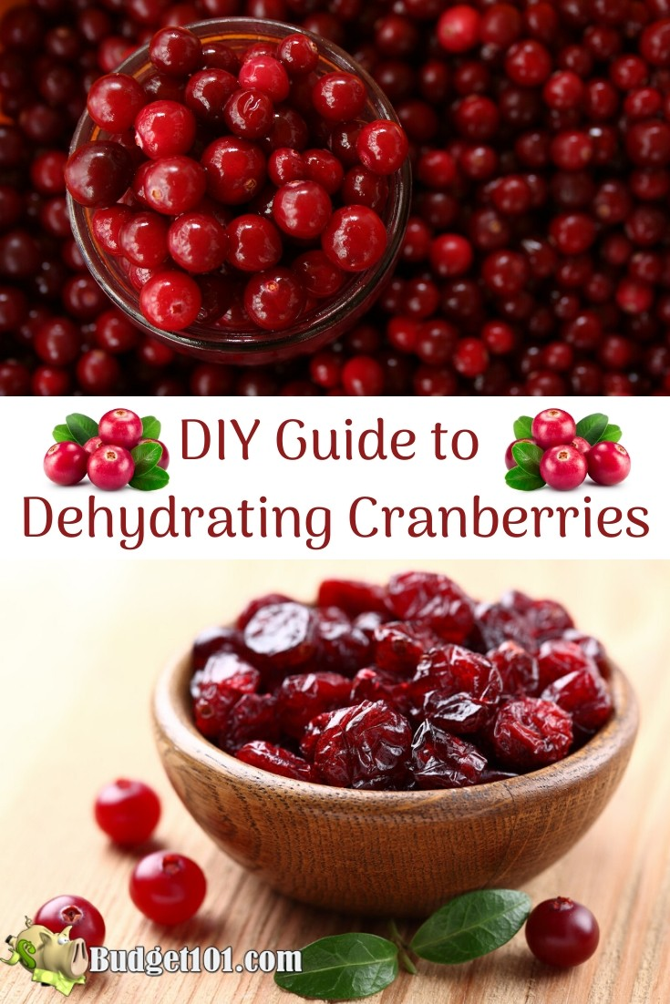 DIY Guide to Dehydrating Cranberries