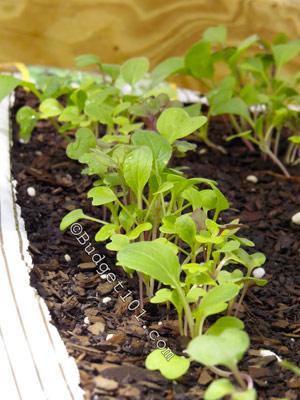 weed-free-gardening