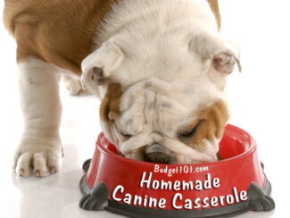 casserole for canines
