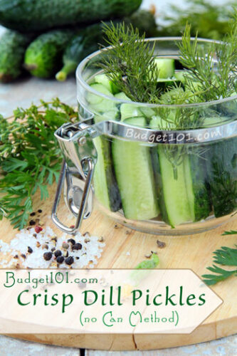 overnight crisp dill pickles