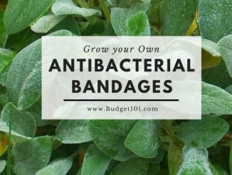 Grow Your Own Antibacterial Bandages