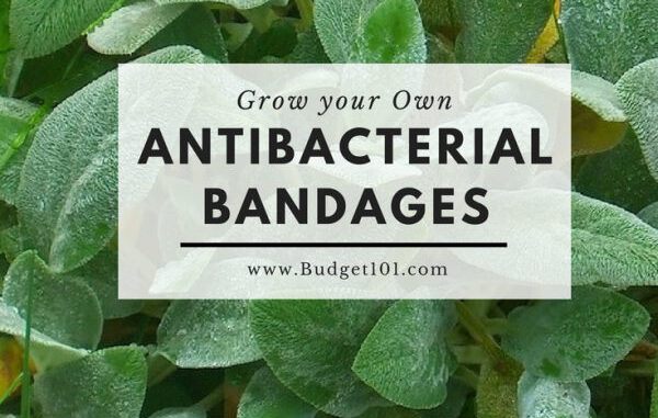 5ca007be70ae0 grow your own antibacterial bandages