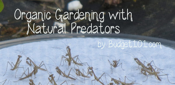 organic-natural-pest-control-for-the-garden