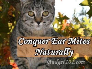conquering ear mites naturally