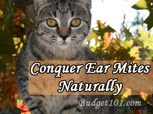 coconut oil for ear mites