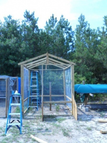 all-cooped-up-how-to-build-a-chicken-coop