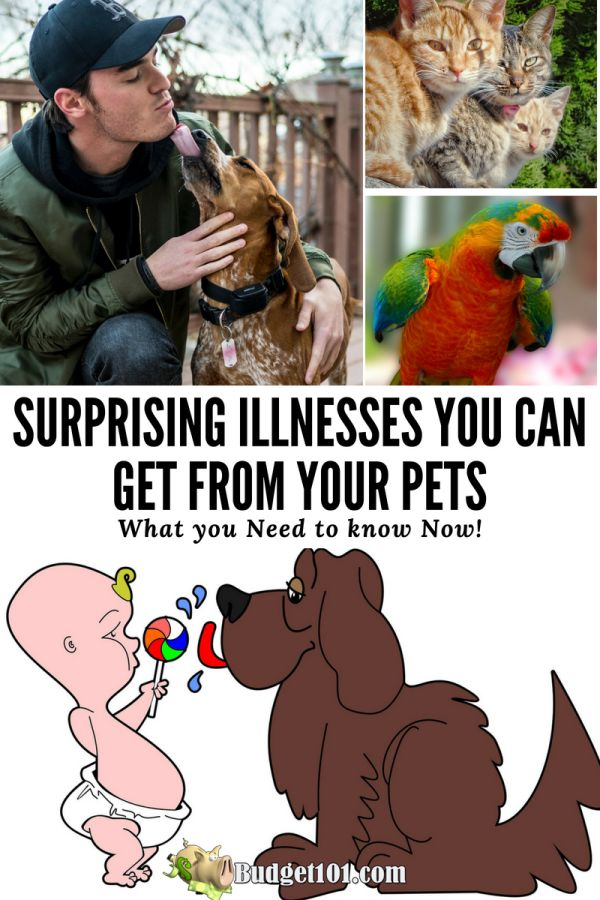 surprising-illnesses-you-can-get-from-your-pets-what-you-need-to-know