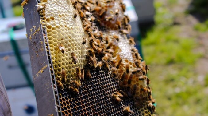 5ca0073d88e7a a step by step guide to setting up a new hive of honey bees