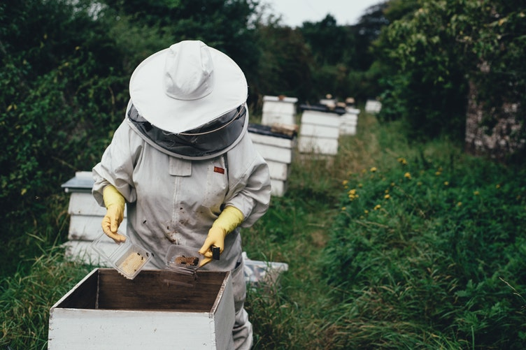 a-step-by-step-guide-to-setting-up-a-new-hive-of-honey-bees