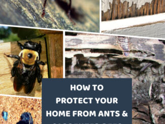 How to Protect Your Home Against Ants and Carpenter Bees