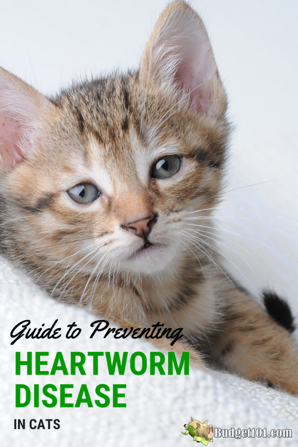how-to-prevent-heartworm-disease-in-cats