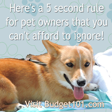 5-second-rule-for-pets