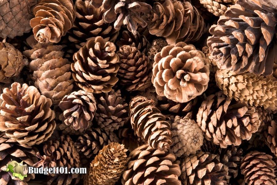 B101-garden-pinecones-repellent