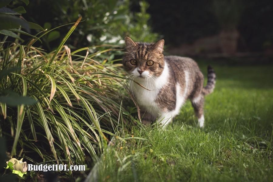 b101-repel-cats-garden