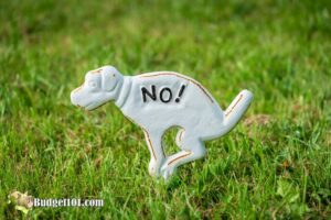 15+ Ways to Repel Dogs and Cats from your Garden
