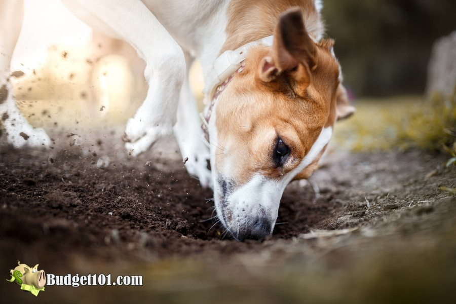 b101-repel-dogs-from-garden