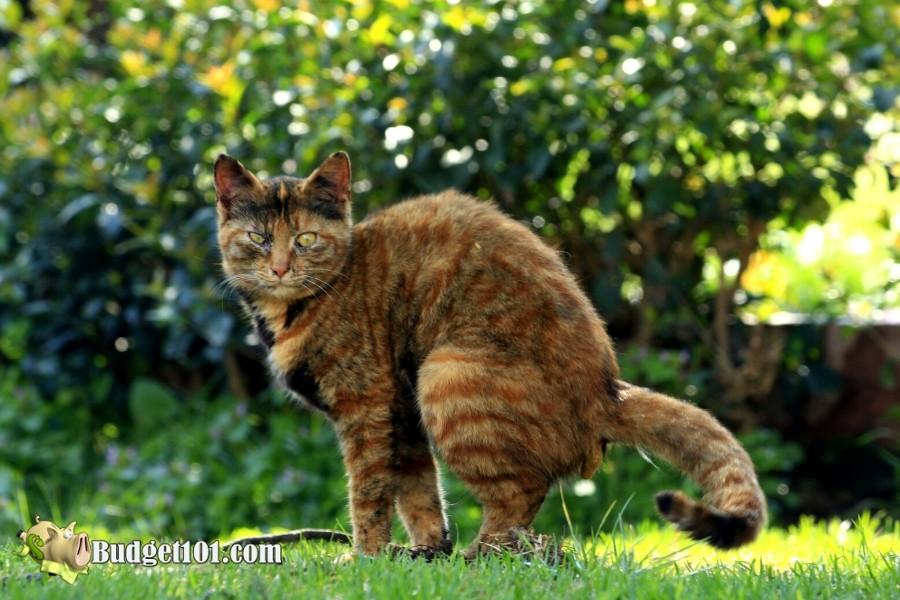 b101-repelling-cats-garden