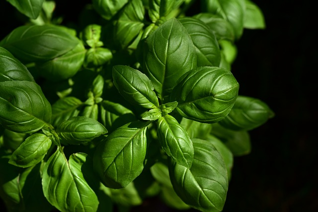 5ca00731ca5e9 10 excellent herbs to grow at home