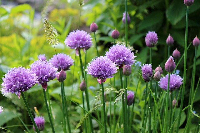 10-excellent-herbs-to-grow-at-home