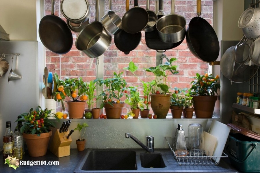 Fruit Flies in Houseplants