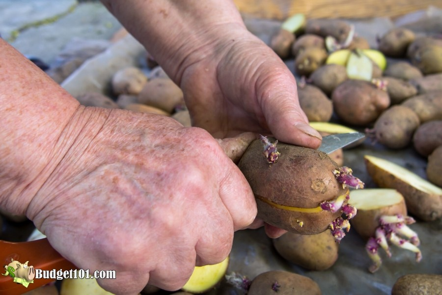 b101-grow-potatoes-cutting-seed-potato