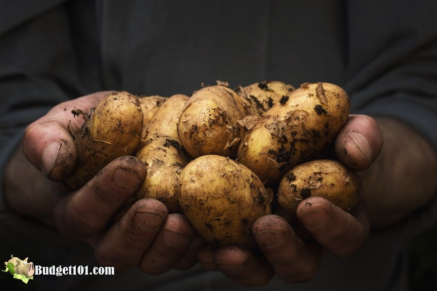 b101-home-grown-potatoes