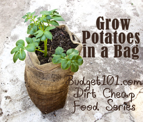 growing-potatoes-in-bags