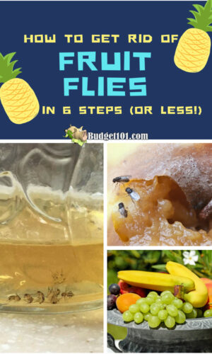 how to get rid of fruit flies in six steps or less