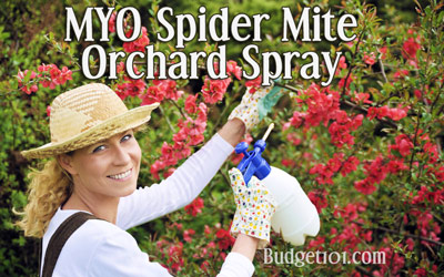 orchard-buttermilk-spray