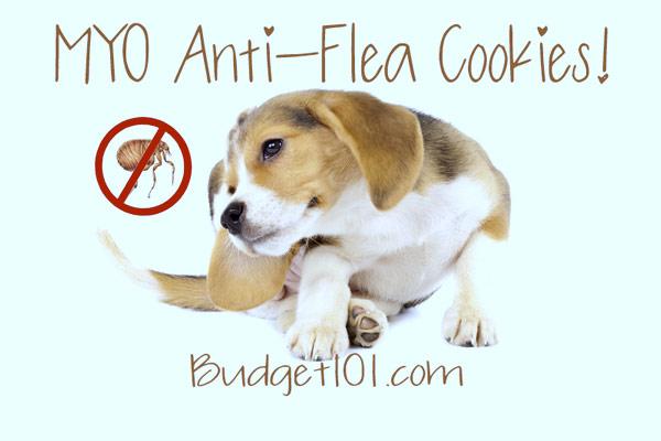anti-flea-cookies