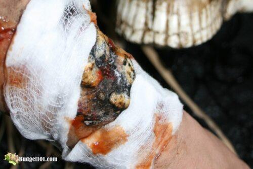 b101 pus filled burn wound halloween effect