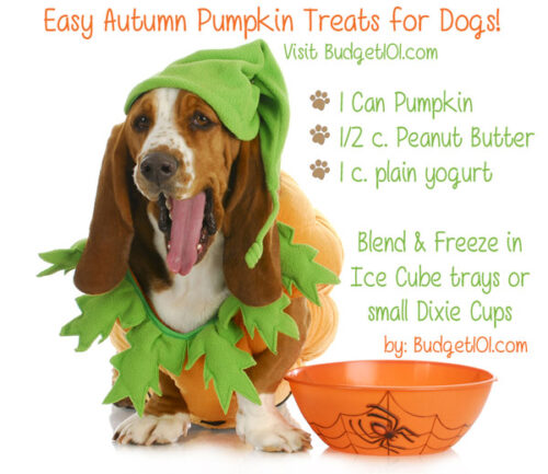 fall pumpkin treat for pets