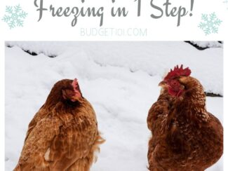 how to keep your chickens water from freezing
