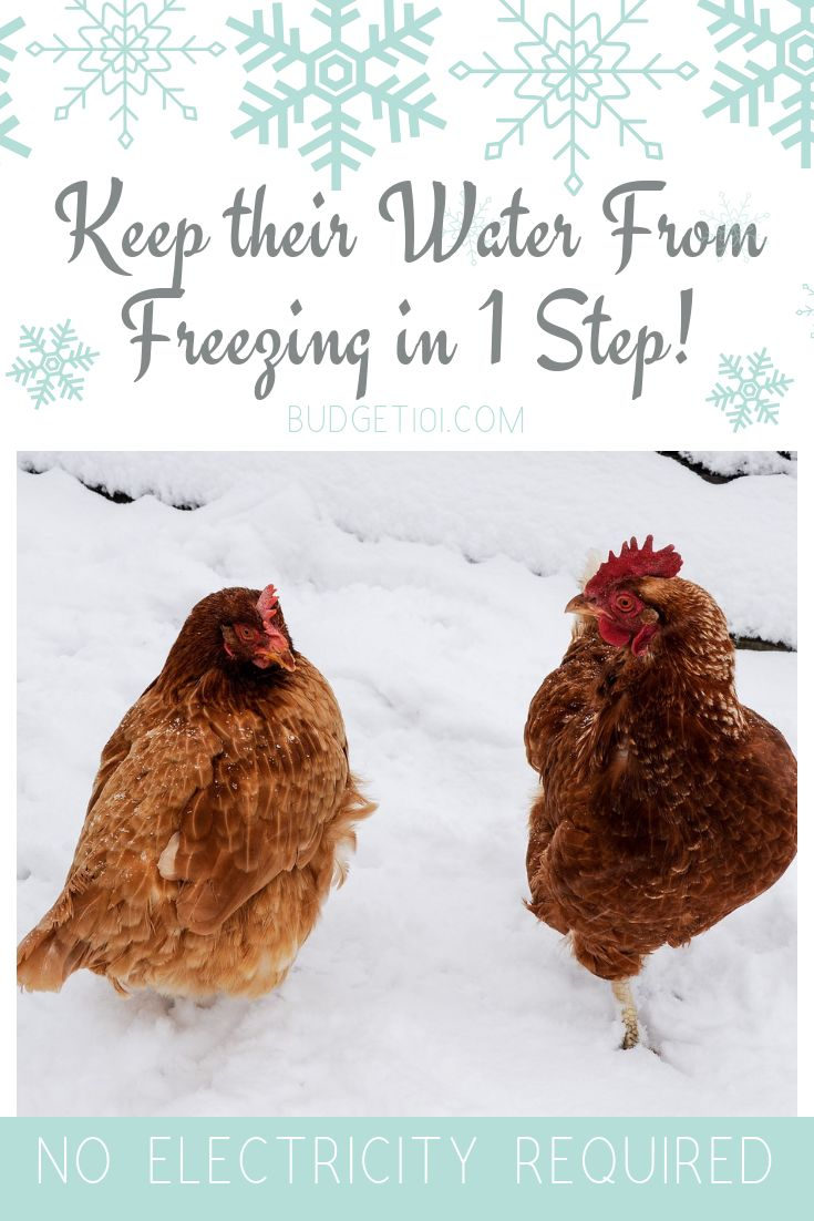 how-to-keep-your-chickens-water-from-freezing