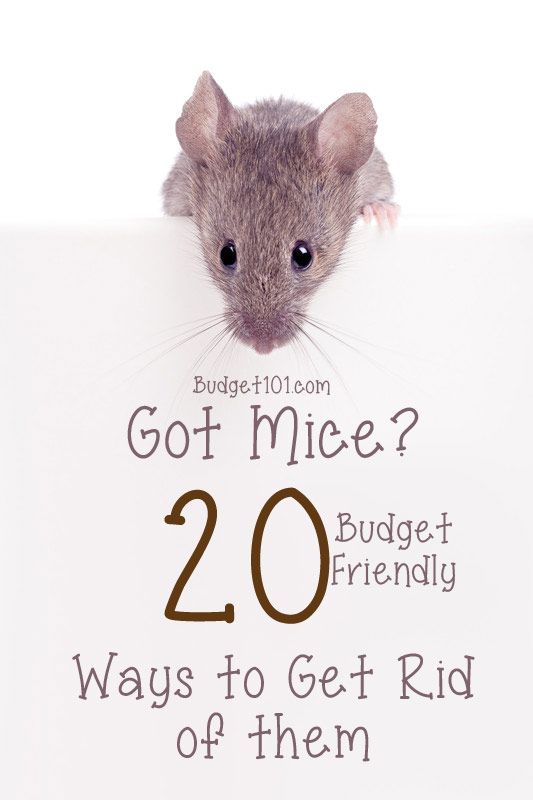 20 Ways to Get Rid of Mice | Homemade Pesticides | Mouse