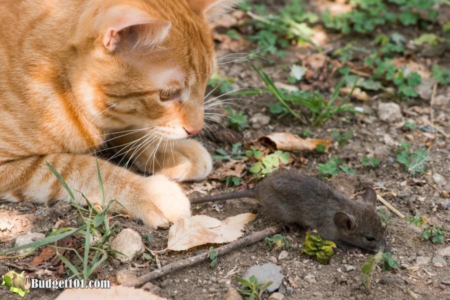 b101-20-ways-get-rid-mice-1