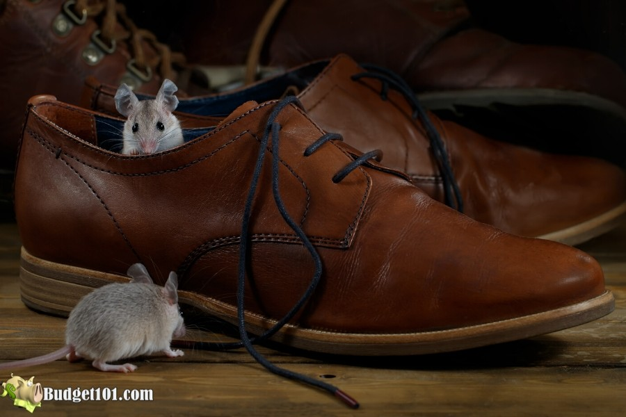 b101-20-ways-get-rid-mice-2