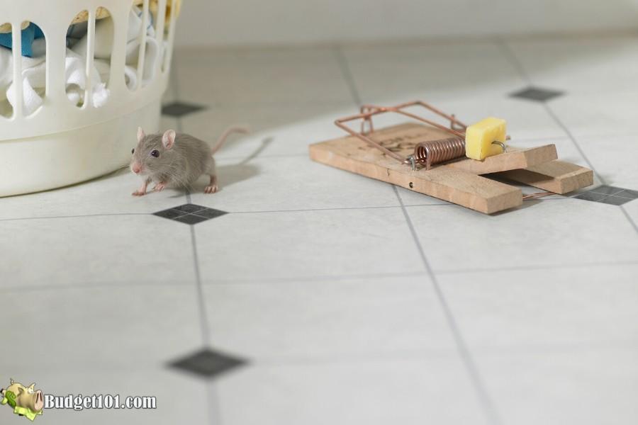 b101-20-ways-get-rid-mice-4